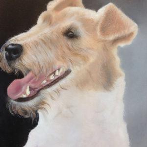 Fox Terrier. Prijs op aanvraag.